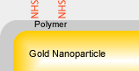 NHS conjugated gold nanoparticles